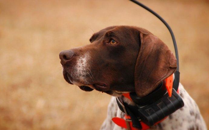 GPS-трекер для собак (охотничий ошейник-навигатор), кому он может